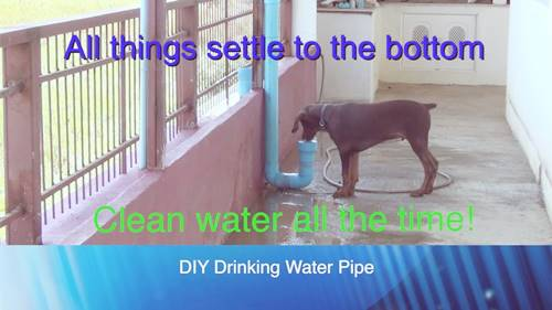 Drinking Water Pipe For Dogs