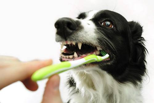 Coconut Oil For Your Dog's Teeth