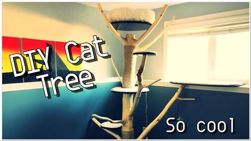 DIY Cat Tree From Branch