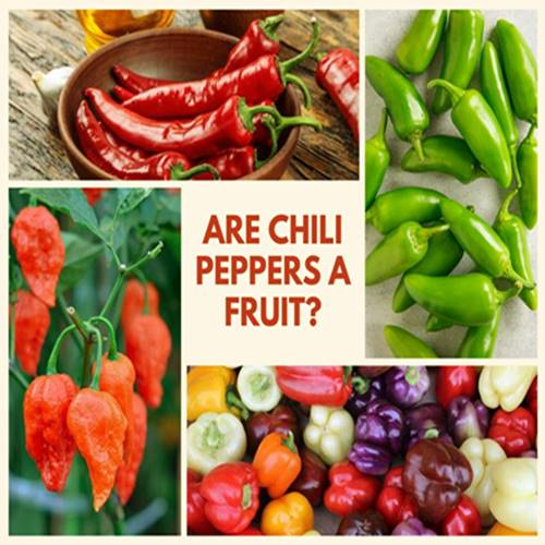 Are Chili Peppers A Fruit? Is chili Peppers a Fruit Or Not