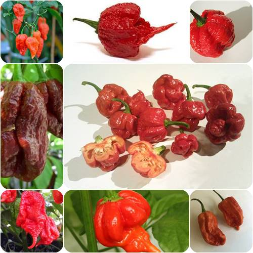 Top 10 Hottest Peppers In The World