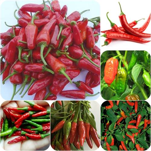 Best Chilis To Grow At Home