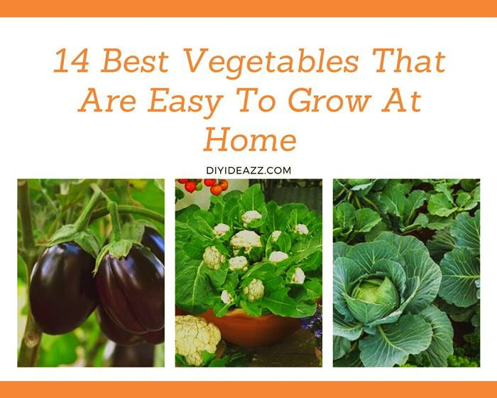 14 Best Vegetables That Are Easy To Grow At Home | Care | How To Grow