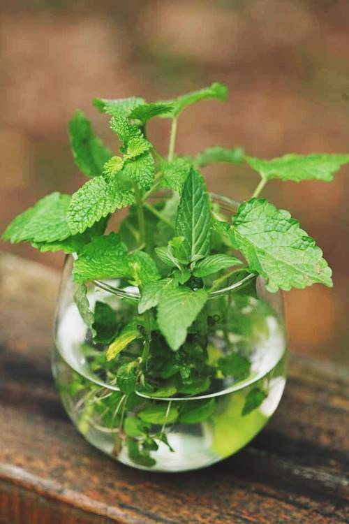 Another Method (Grow Mint From Water)