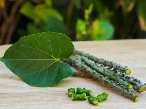 How To Grow Giloy In USA | How to grow giloy plant faster