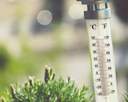 Soil Temperature For Thyme