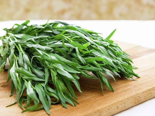 How to grow tarragon in the Philippines
