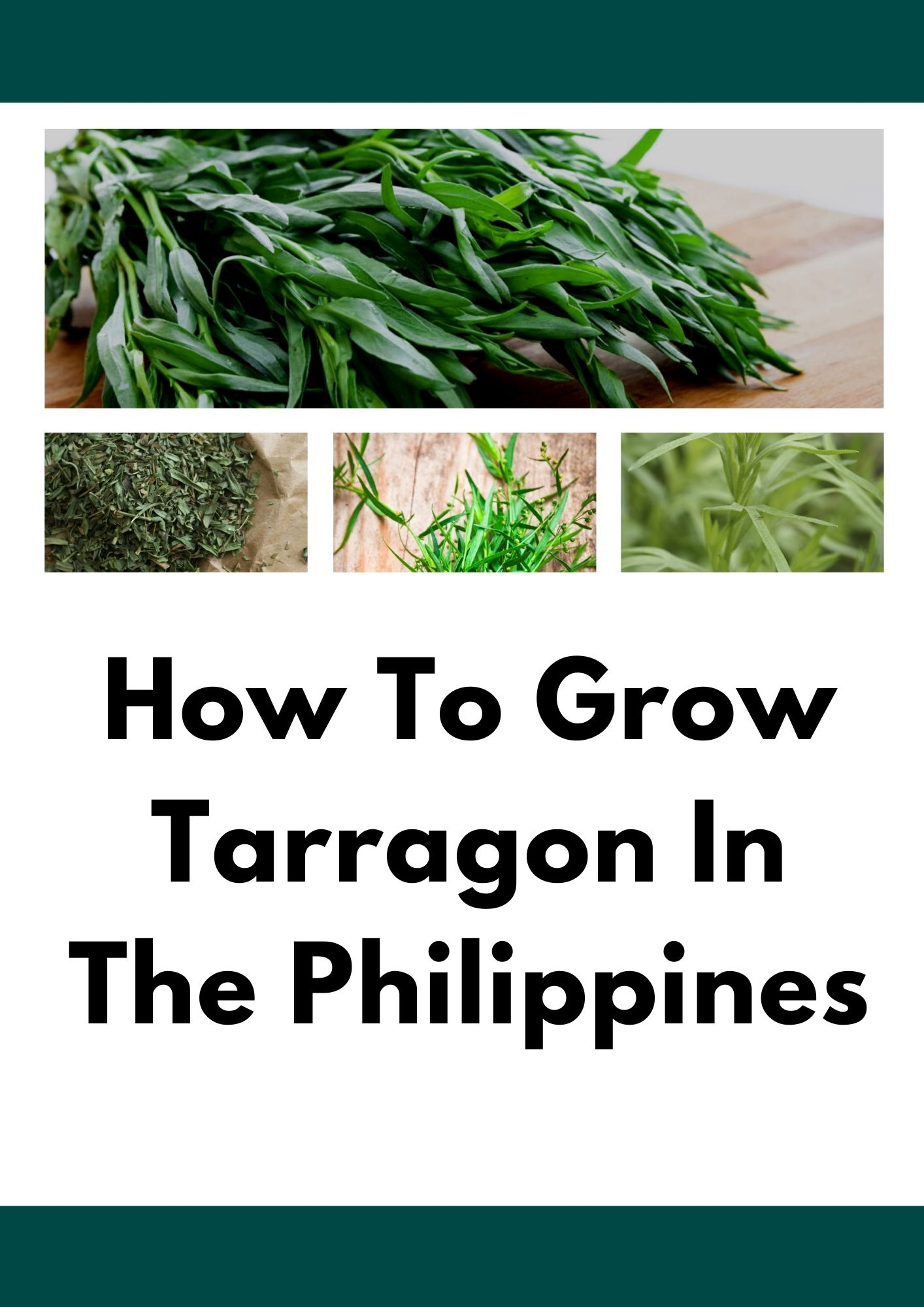 How To Grow Tarragon In The Philippines   Detailed Article