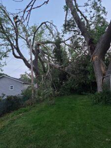 1105 15th Tree Damage