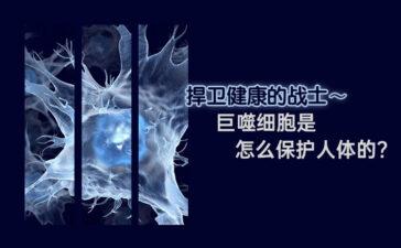 巨噬细胞是怎么保护人体的 Blog Featured Image
