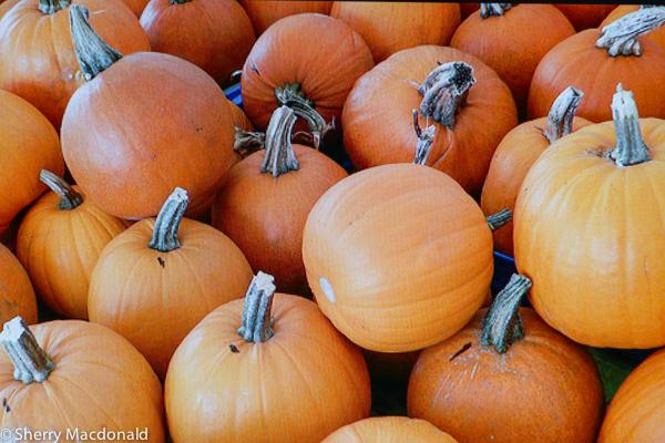 Pumpkin fall recipes