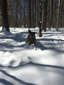 Cross Country Skiing and Trekking with your Dog