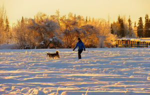 cross country skiing with your dog