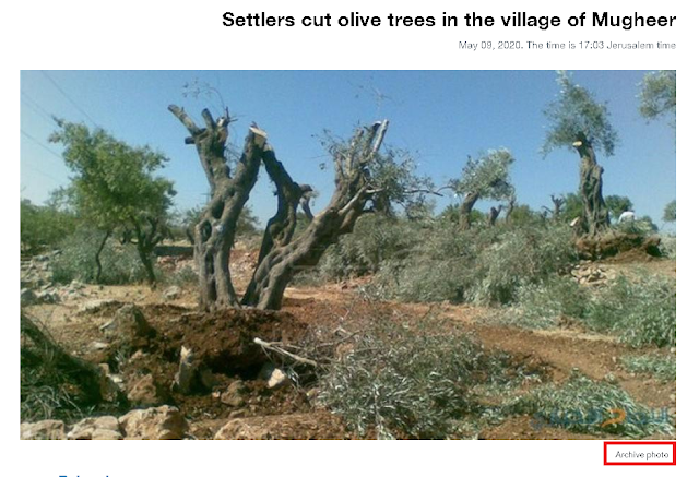 Screenshot of archived photo of chopped down trees in Mugheer