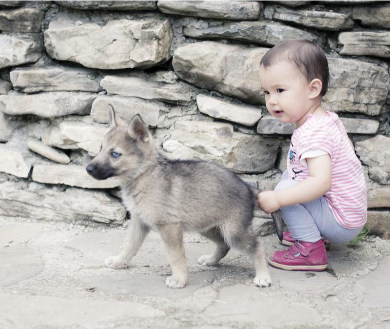 Baby pulls dog's tail