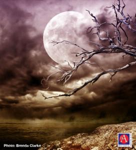 moonbranchesBrendaClarke