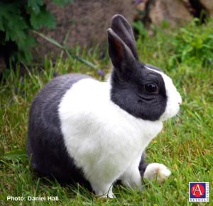 rabbitB&WDanielHallFCC