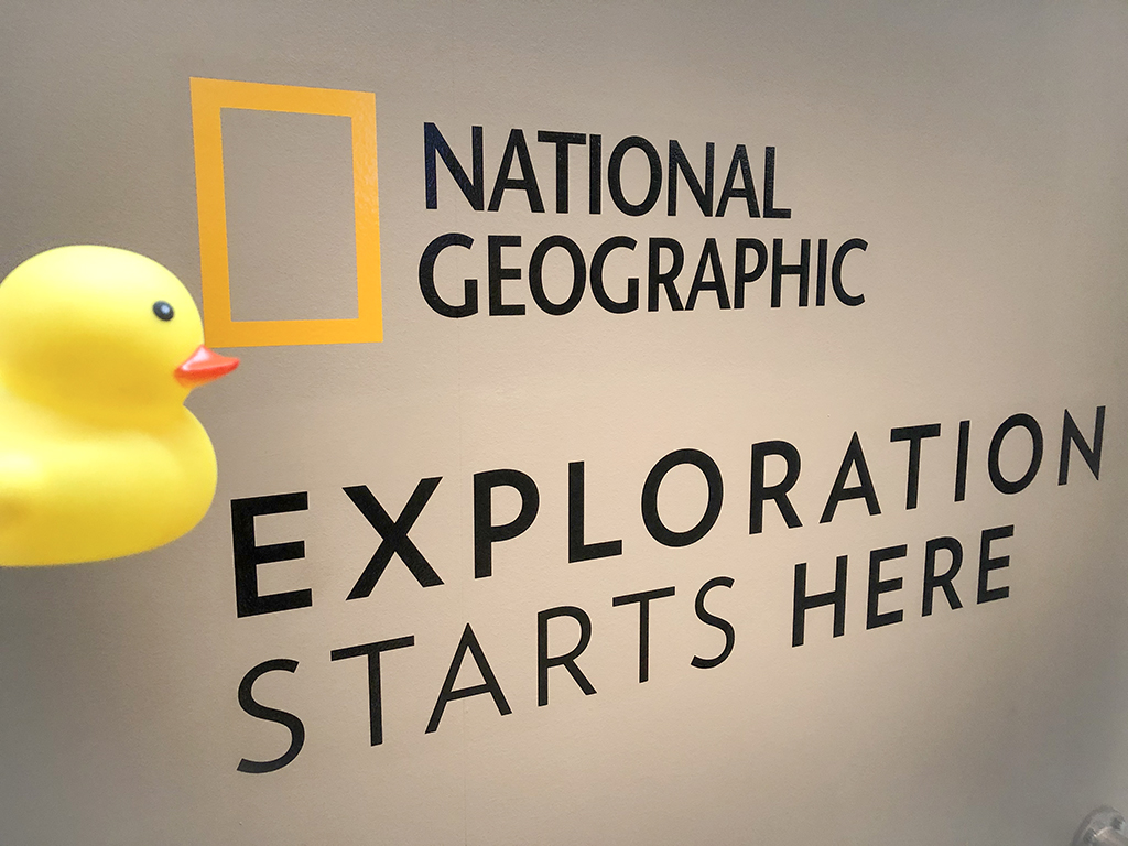 national geographic office, washington, rochelle strauss, author, writer, childrens books, one well, tree of life