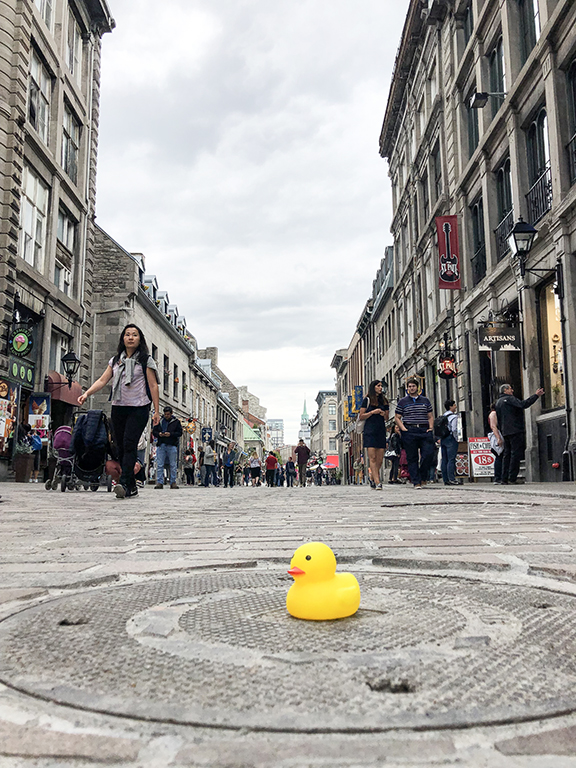 duck, montreal, rochelle strauss, author, travel, street, tourist, travelling