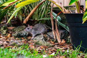 mouse in the leaves outside house