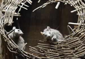 mice in the attic