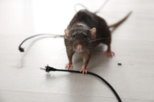 mouse chewing wires