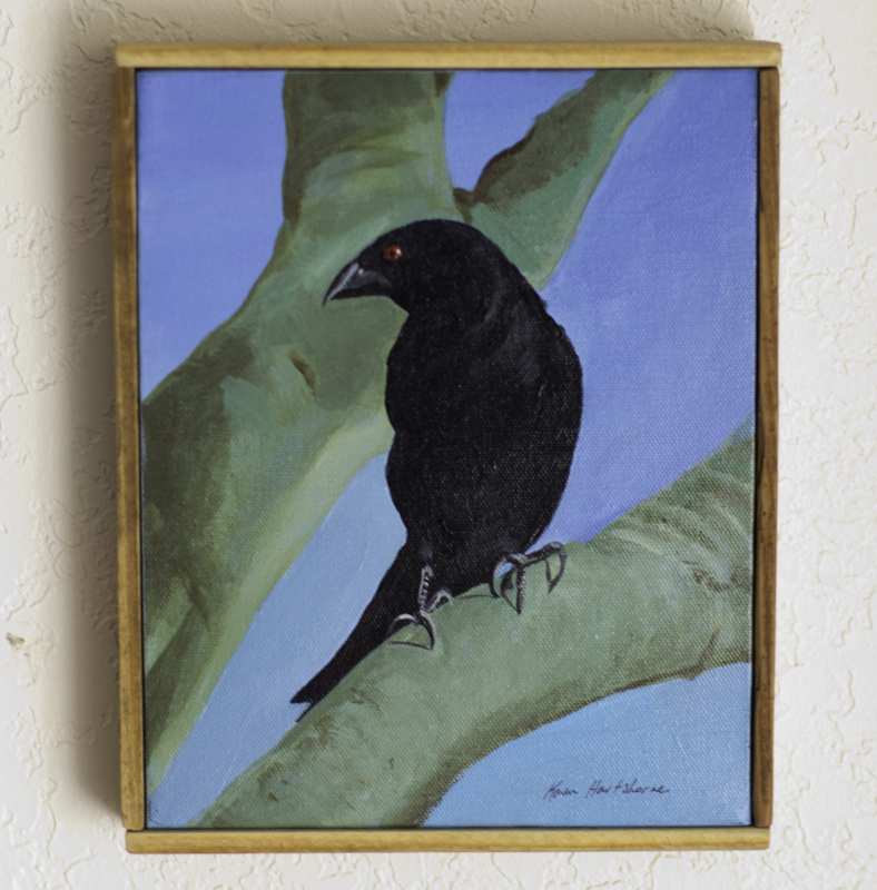 Cowbird, Acrylic on Canvas, K Cook painting