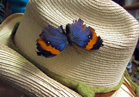 butterflyhat1