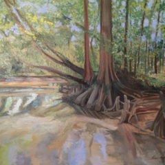 Atachafalaya Cypress