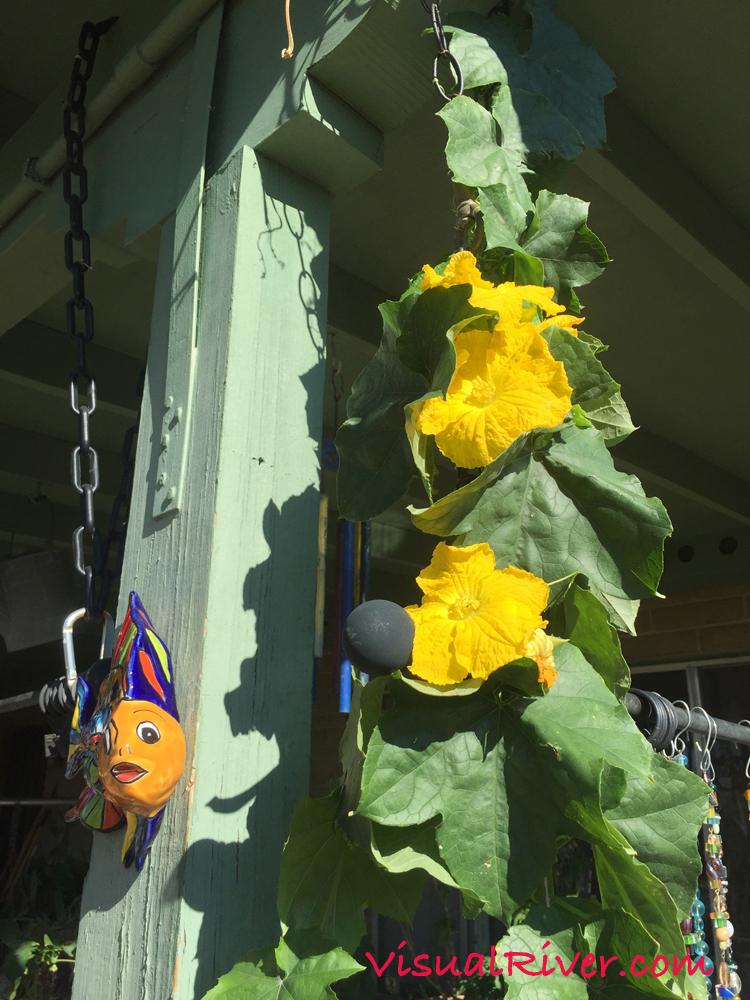 Bright Yellow Luffa Sponge Flowers