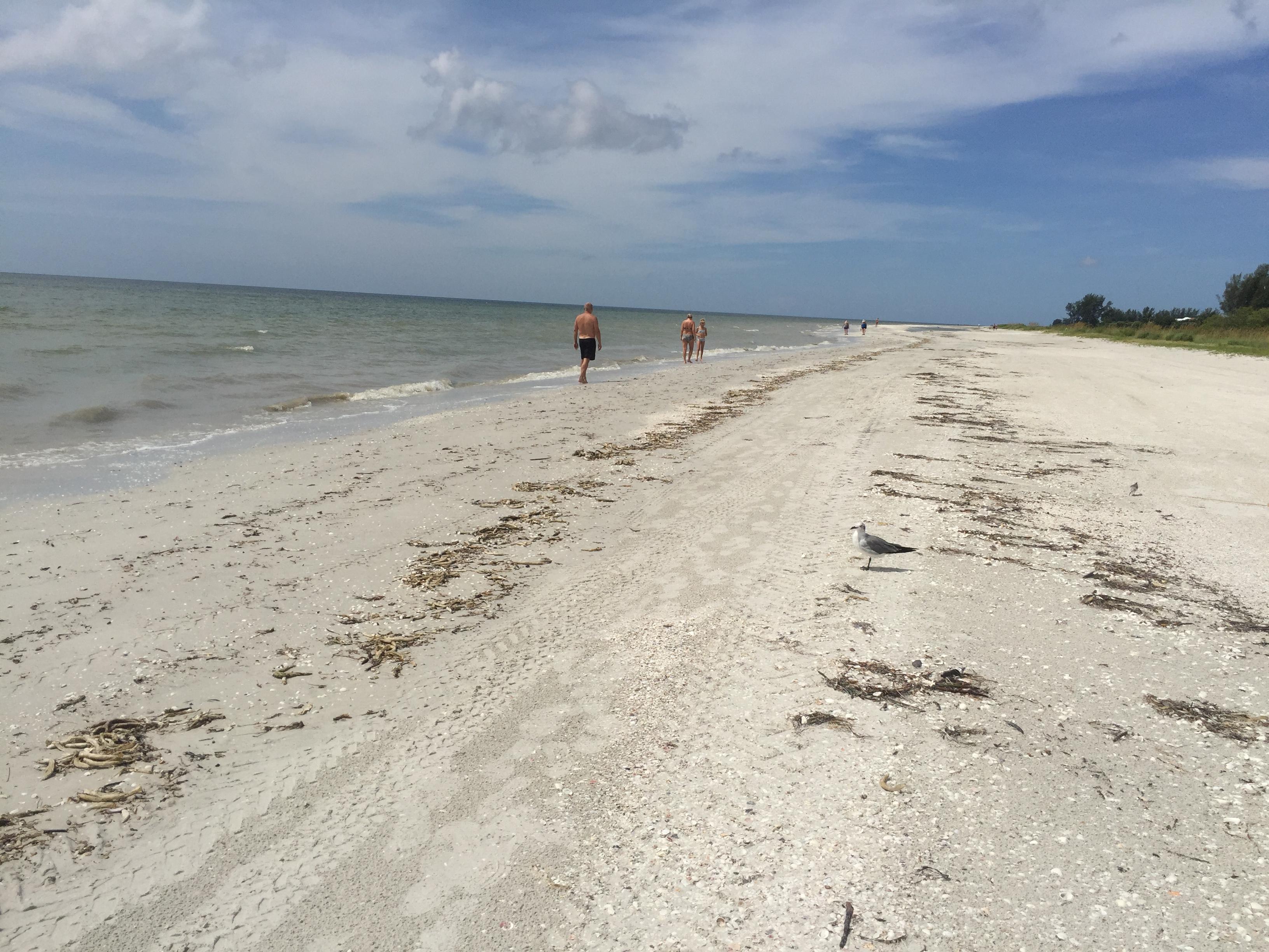 Looking for Shells on Sanibel Island, Florida
