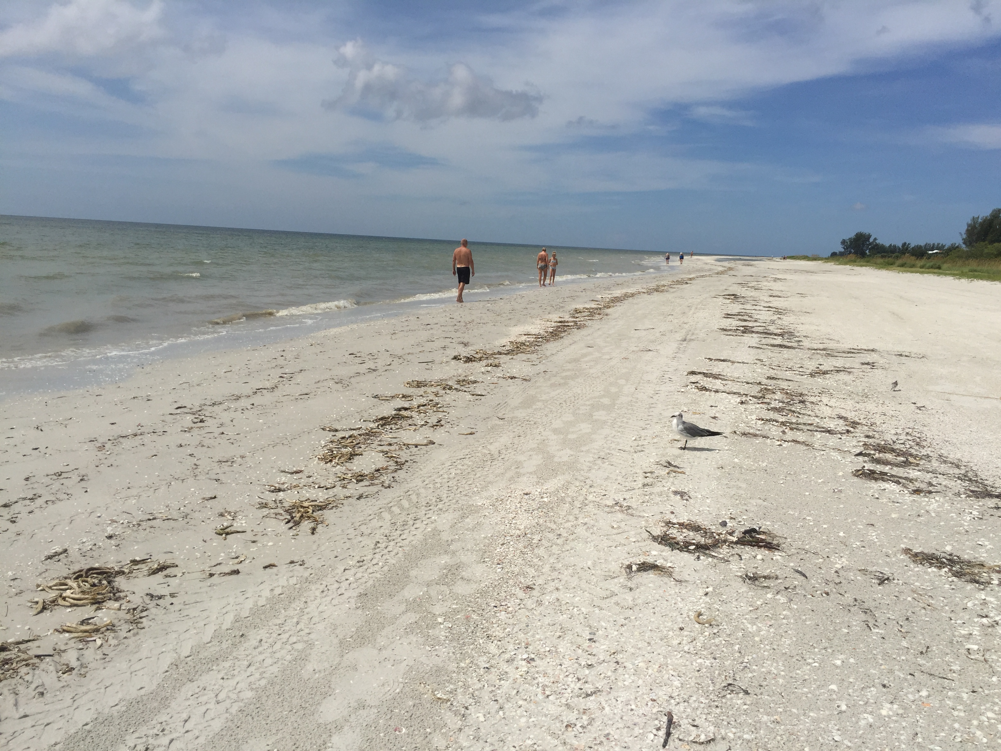 Looking for Shells on Sanibel Island, Florida