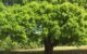 Laurel Oak on Coral Oaks Golf Course in Cape Coral Florida
