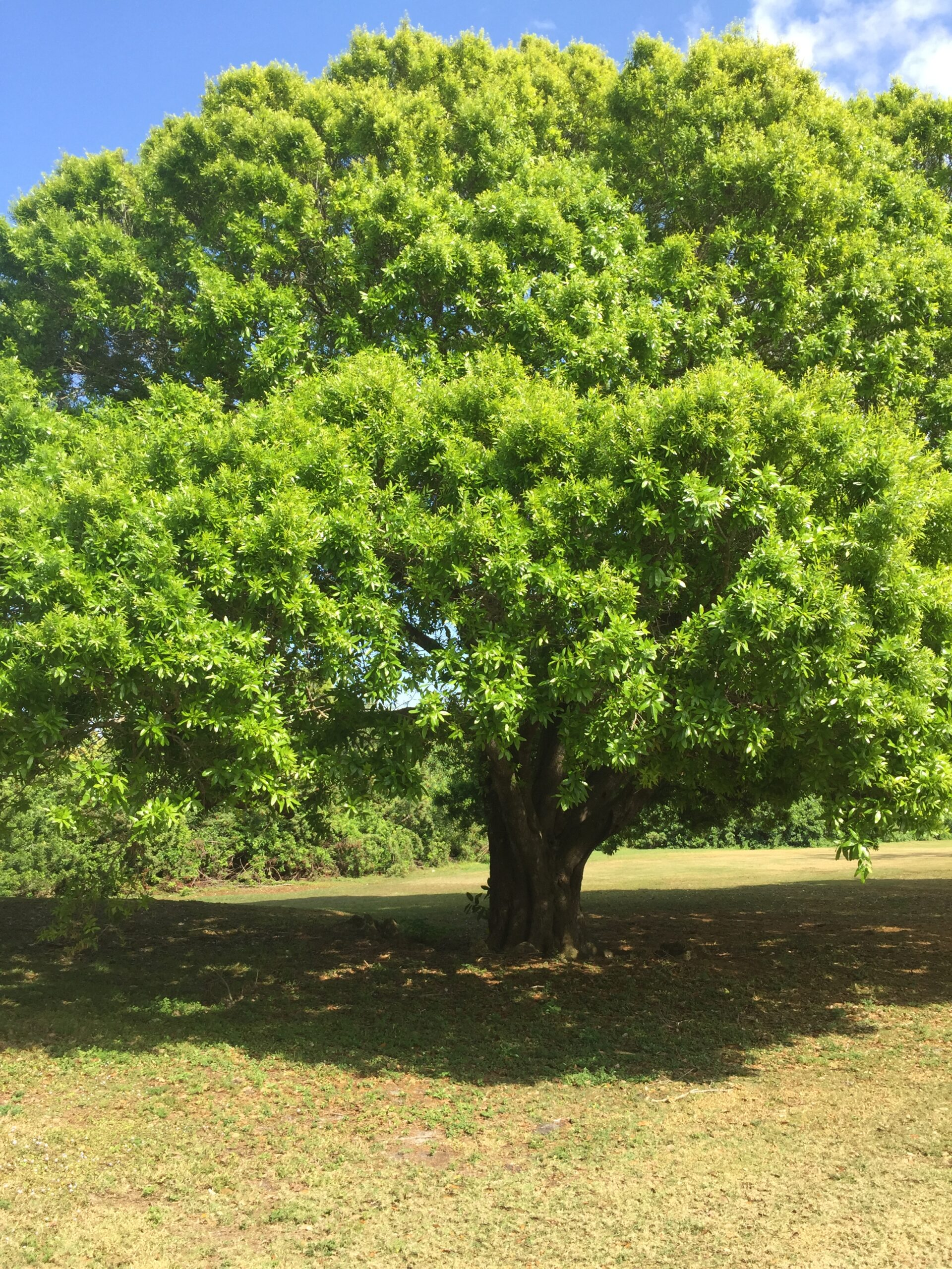 Laurel Oak on Coral Oaks Golf Course