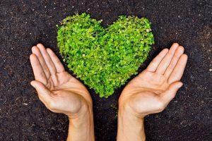Ten Ways to a Green Home