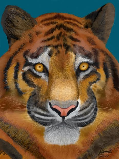 Tiger HMA