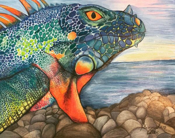 HMA Iguana