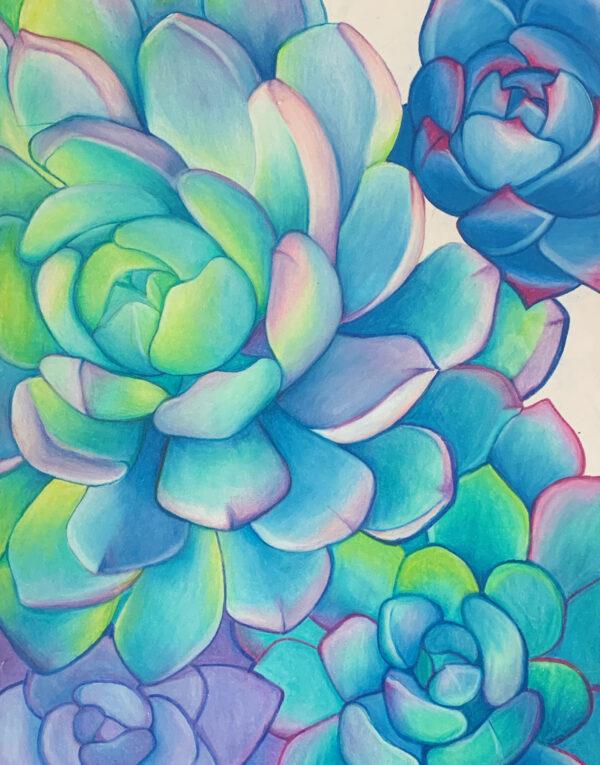 Succulents_HMA