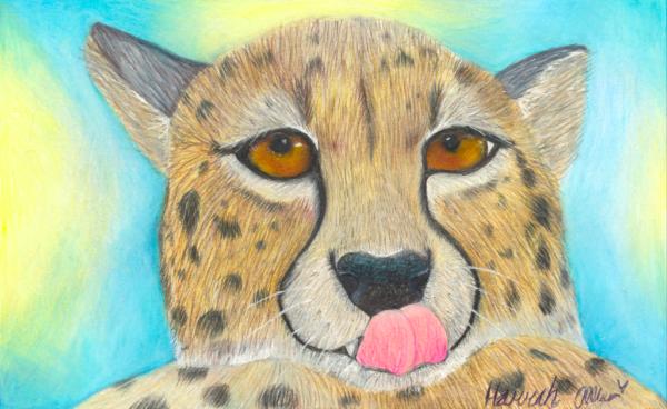 HMA Cheetah