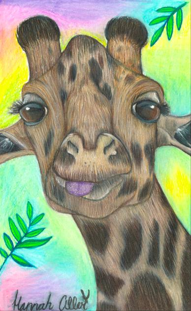 Giraffe HMA