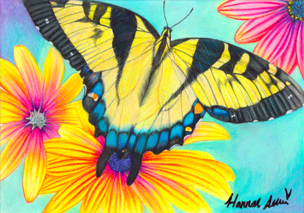 HMA Tiger Swallowtail Butterfly