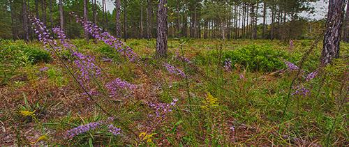 Lafayette Forest WEA