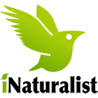 iNatulalist Logo
