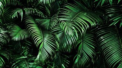 LoL Jungle