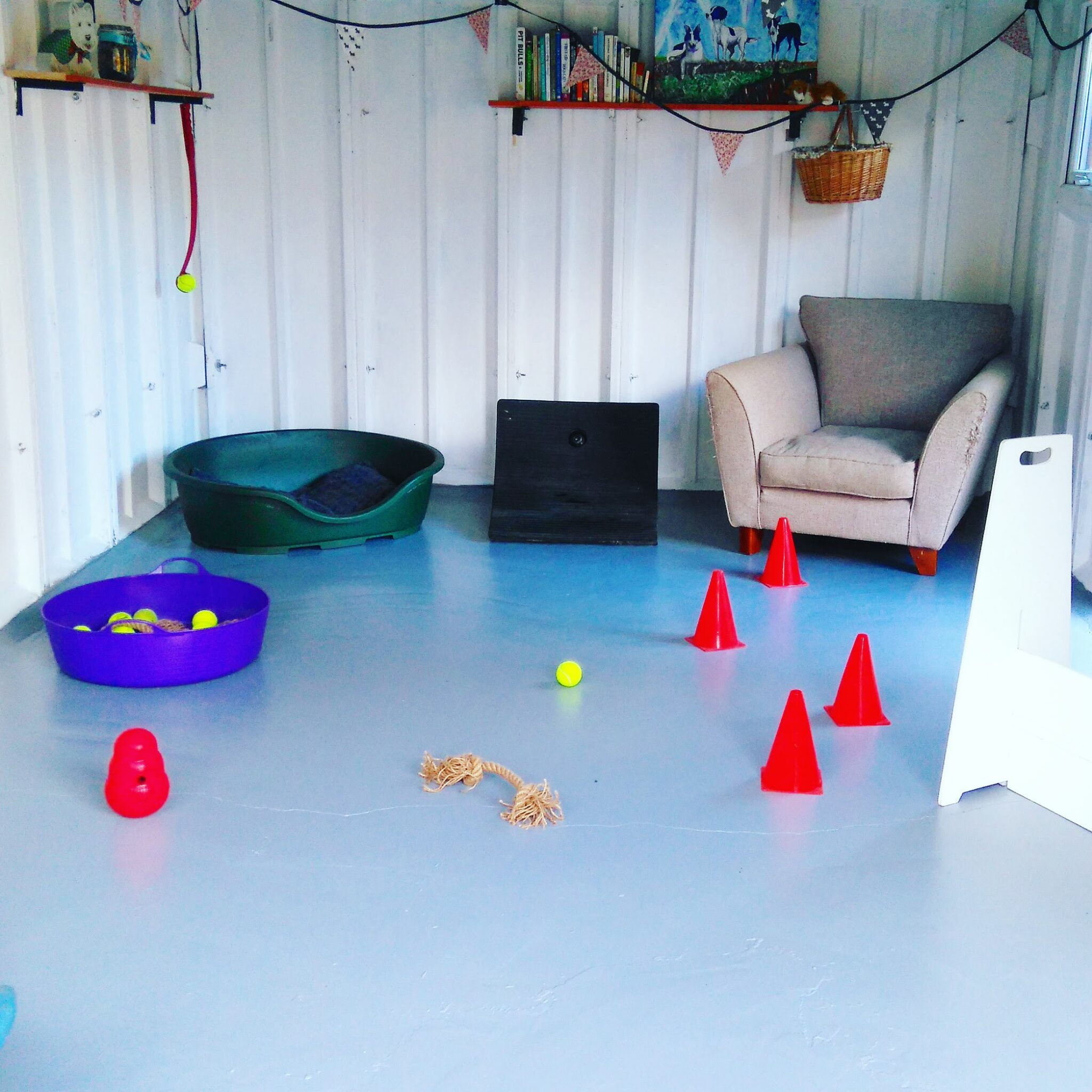 dog day care southampton