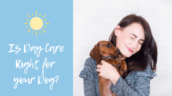 is day care right for your dog?