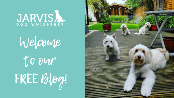 Welcome to our Blog!