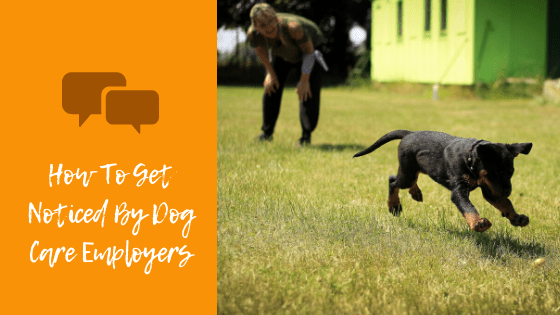 How To Get Noticed By Dog Care Employers