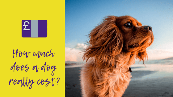 How much does a dog really cost?