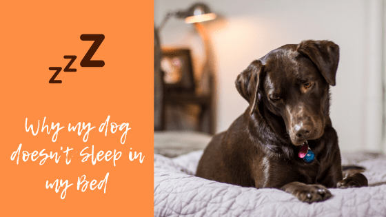 Why my dog doesn't sleep in my bed